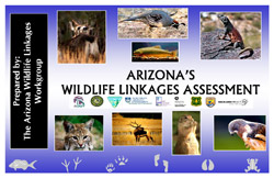 Arizona's Wildlife Linkages Assessment Report